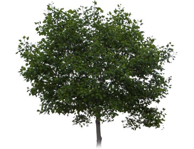 Waldtage Baum